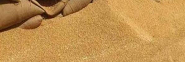 مصر توافق على شراء 120 ألف طن من القمح