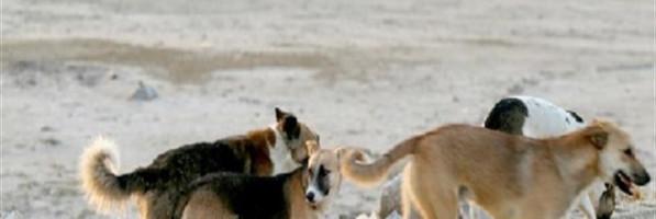 الكلاب الضالة ترشد عن جثة فتاة مختفية منذ 14 يومًا بالدقهلية